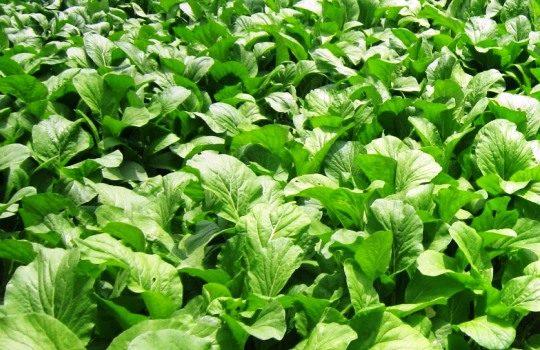 Peluang Usaha Bidang Pertanian Berpotensi dan Menggiurkan
